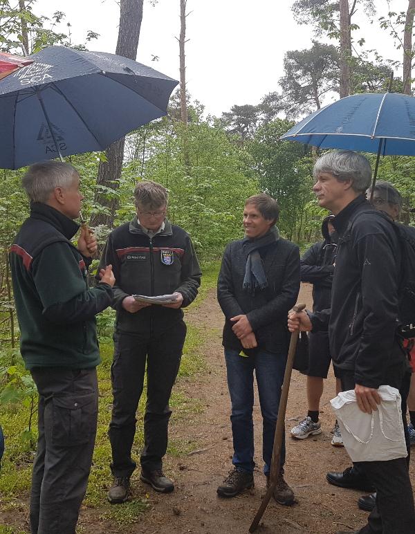 Mit dem Klimawandel wird sich der Griesheimer Stadtwald weiter massiv verändern